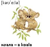 коала