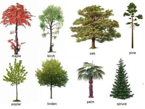 Trees - Lista nombre arbustos ...